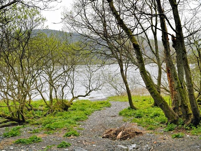 Path to Bassenthwaite Shore