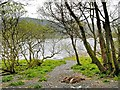 NY2032 : Path to Bassenthwaite Shore by David Dixon