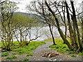 NY2032 : Path to Bassenthwaite Shore by David Dixon