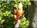 NT9342 : Spring Bud by David Clark