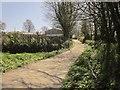 SX4771 : Lane at Walreddon by Derek Harper