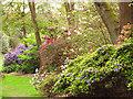 SU9769 : Valley Gardens: spring flowers by Stephen Craven