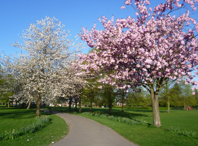Blossom time in Eltham Park South