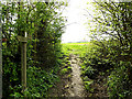 TM3569 : Loves Lane footpath by Adrian Cable