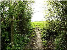 TM3569 : Loves Lane footpath by Geographer