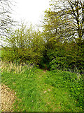 TM3569 : Loves Lane footpath to Pouys Street by Adrian Cable