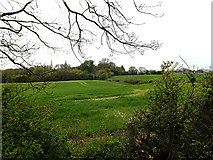 TM3569 : Looking towards Mill Hill by Geographer
