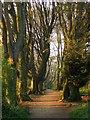 TQ3209 : Track, Great Wood by Simon Carey