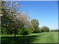 TQ2460 : The London LOOP crossing banstead Downs Golf Course by Marathon