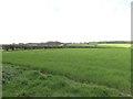 TG1034 : Norfolk Wheatfield by Adrian S Pye