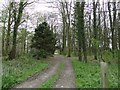 TG1533 : Track through the trees at Broom Covert by Adrian S Pye