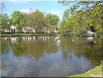 TQ4094 : Village Pond, Buckhurst Hill by Des Blenkinsopp