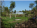 SU8279 : Greenhouse, Knowl Hill by Alan Hunt