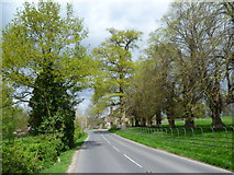 TQ5244 : Penshurst Road alongside Penshurst Park by Marathon