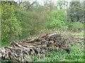 TQ5246 : Logs by Redleaf Wood by Marathon
