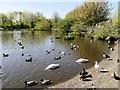 SD4214 : WWT Martin Mere, Lake Outside Visitor Centre by David Dixon
