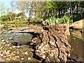 SD4314 : Wetland Centre, Martin Mere by David Dixon