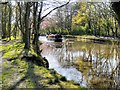 SD5810 : Leeds and Liverpool Canal South of Arley Bridge by David Dixon