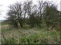 NZ1654 : Site of East Bushblades by Robert Graham