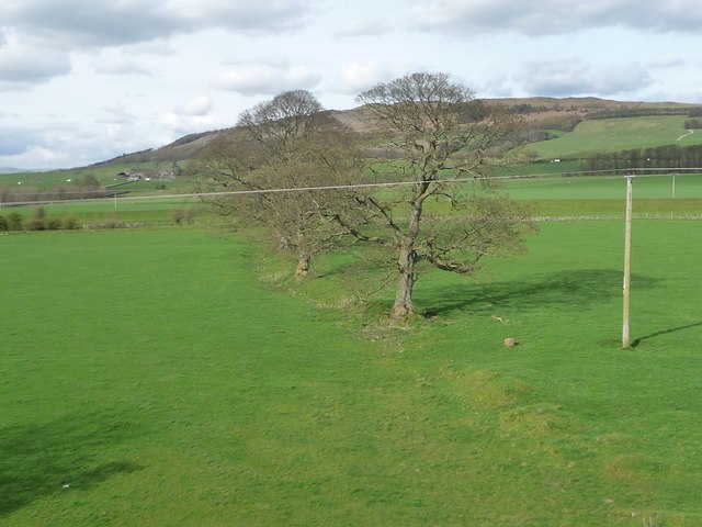 Trees along a former field boundary near the River Aire