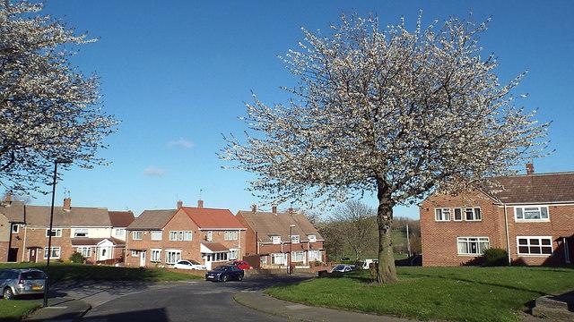 Abercorn Road, Farringdon, Sunderland