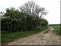 TM4484 : Footpath to the A145 London Road by Adrian Cable
