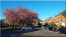NZ3955 : Lambourne Road, Sunderland by Malc McDonald