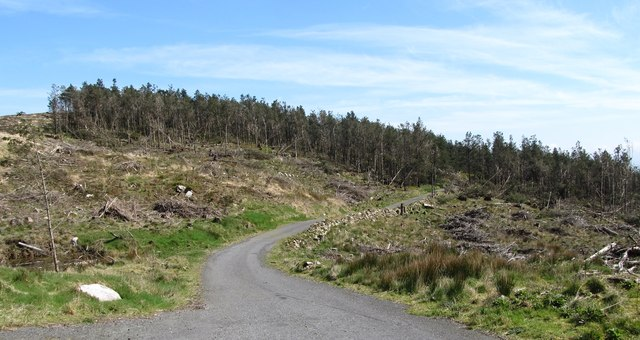 Cut-over forest east of the 90 degree bend in the Camlough Wood Road