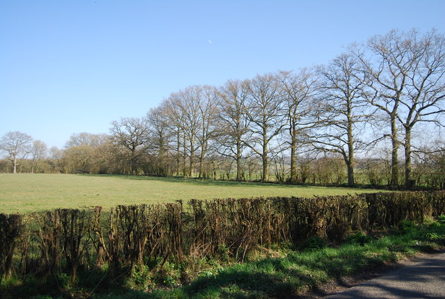 Line of trees, Mundy Bois by N Chadwick