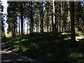 SU8416 : Tumulus in Bepton Wood by Chris Gunns