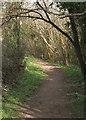 SS8477 : Public footpath in woodland near Wig Fach by eswales