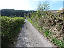 J0525 : The top of Carrivekeeney Road ascending towards Camlough Wood by Eric Jones