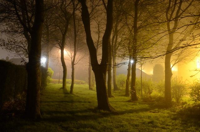 Suburban Trees at Night