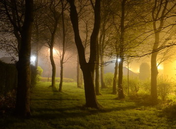 NZ2567 : Suburban Trees at Night by Andrew Tryon