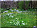 NR8695 : Wildflower meadow by the River Add at Sandgate by sylvia duckworth