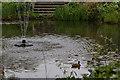 TQ3499 : Lake, Myddelton House, Enfield by Christine Matthews