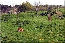 SE6301 : Yorkshire Wildlife Park: Lion County by Graham Hogg