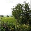 C1821 : Hedge near Milford by Richard Webb