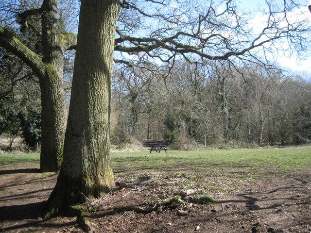 Picnic area in Pitcheroak Wood, Redditch