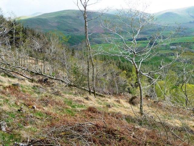 Regrowth, Park Wood