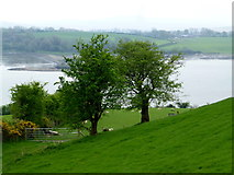 C3322 : Trees on a slope, Inch Island by Kenneth  Allen