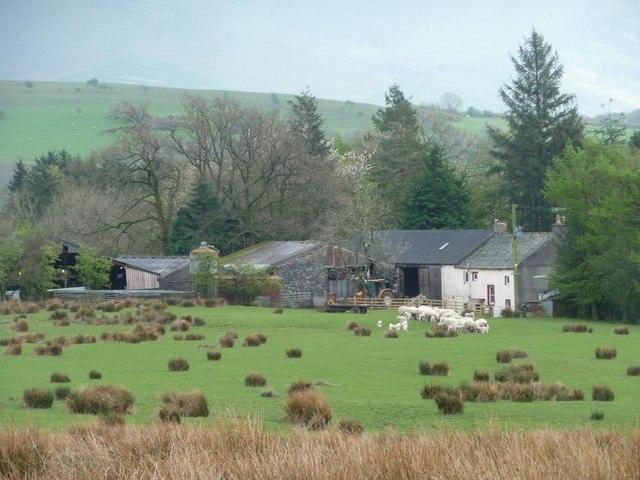 Ewes and lambs at High Bewaldeth [4]