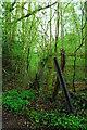 SO6916 : Railway remnants by John Winder