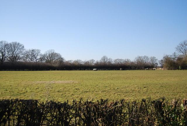 Field by Smarden Rd by N Chadwick