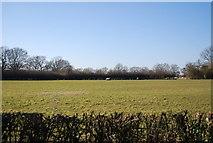 TQ9144 : Field by Smarden Rd by N Chadwick