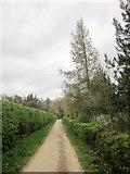 SE2768 : Church Walk by Derek Harper