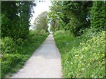 TQ7668 : Path on Great Lines by Marathon