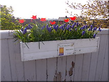 NO8686 : Flower box on Stonehaven station platform by Stanley Howe