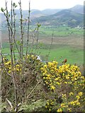 NY2427 : Robin at the upper osprey viewpoint, Dodd Wood by Christine Johnstone