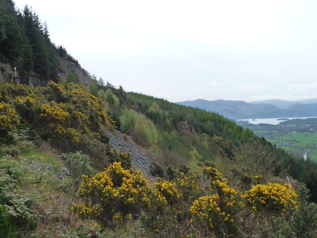 Gorse-covered hillside, Dodd Wood